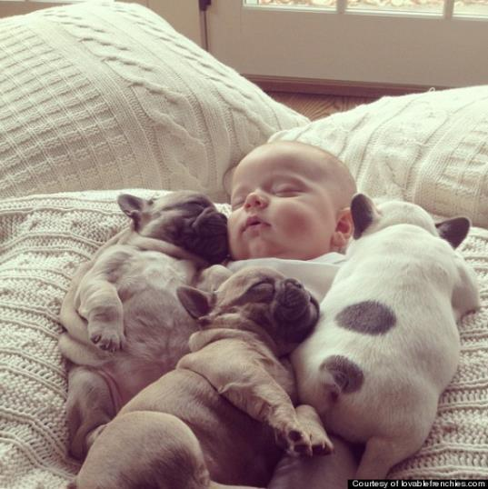 みーんなギューッと抱きしめたくなっちゃう!! ワンコと赤ちゃんのおねむ写真