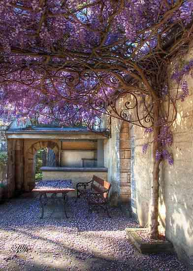 紫が綺麗な画像を貼ろう