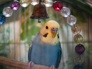 鳥の画像を集めよう