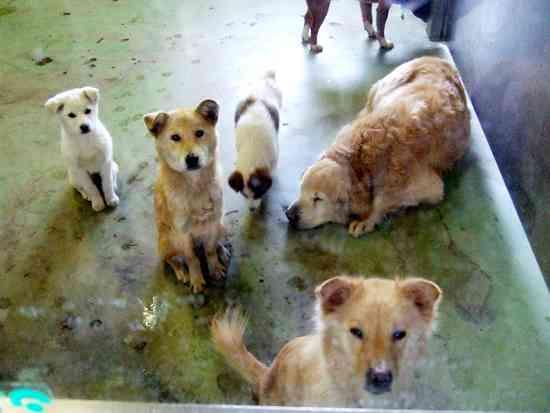 「ペットショップの犠牲犬猫、輸送は身動きできないほどの小さなダンボール箱」…新潟県のホームセンター