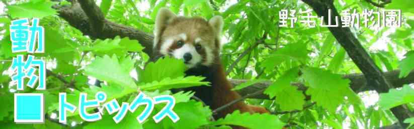 のげやま 動物トピックス | 野毛山動物園
