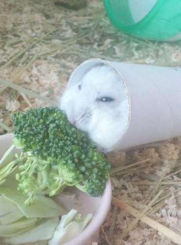 だって食べたいんだもの!筒に入ったままモグモグするハムスターがかわいすぎる