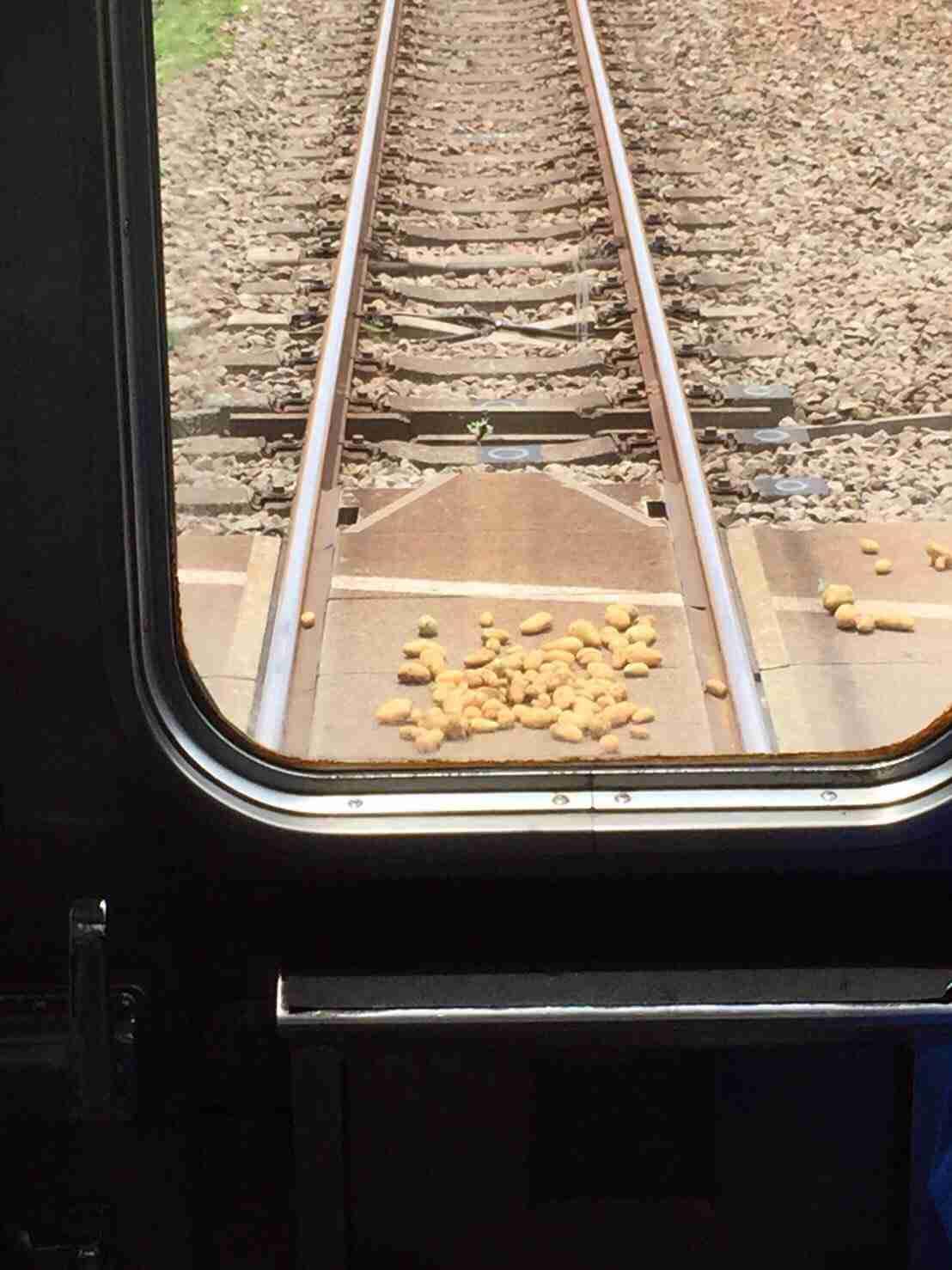 年寄りが線路内に置き石ならぬ置き芋をしたため列車が停止 運転手が芋を撤去 | ゴゴ通信