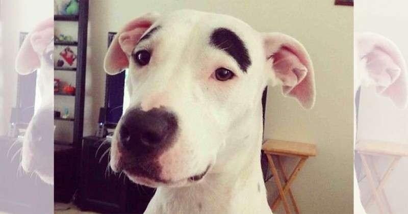 世界で最も変わった模様をもつ18の犬 | CuRAZY [クレイジー]