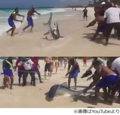 サメ引きずり上げ写真撮り炎上、ライフガードも参加で物議醸す。 | Narinari.com