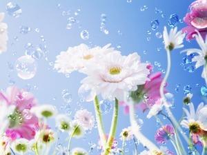 綺麗な花の画像下さい