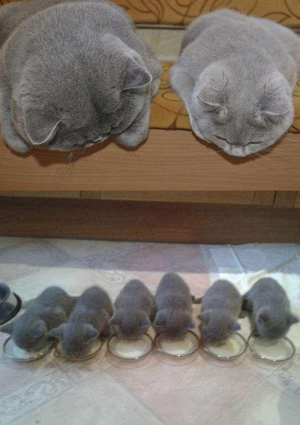 育児に追われる親猫。人間だけでなく猫も子育てって大変なんだニャー | ANIMALive