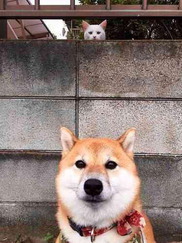 ガルちゃん犬カフェ☆2号店オープンしました