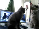 Cute Cats playing Patty Cake! THE ORIGINAL! - YouTube