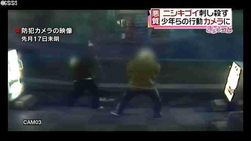 ニシキゴイ刺し殺す…少年らの行動カメラに(日本テレビ系(NNN)) - Yahoo!ニュース