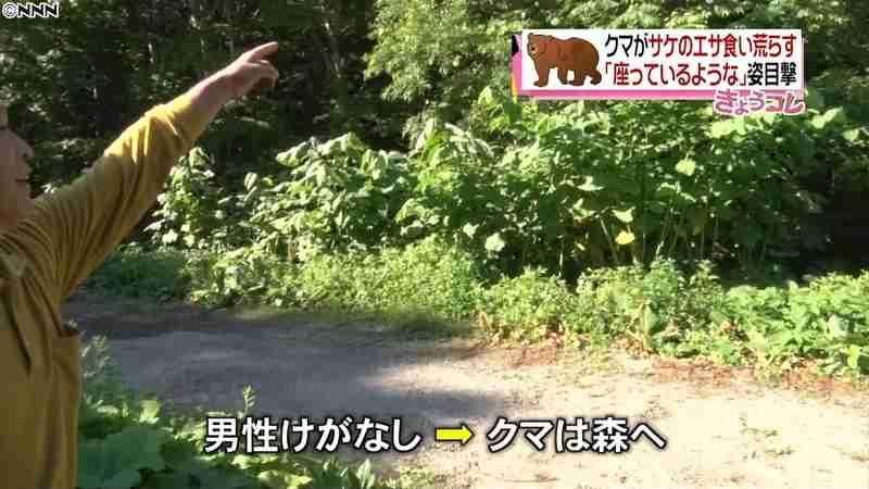 クマがサケの餌を食い荒らす 青森・むつ市(日本テレビ系(NNN)) - Yahoo!ニュース