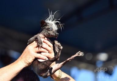 愛らしさも世界一? 「醜い犬コンテスト」今年も開催 米国 写真21枚 国際ニュース:AFPBB News