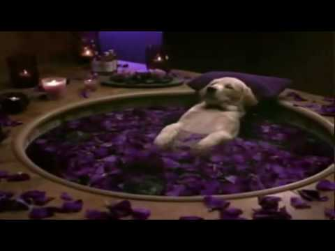 Cottonelle Commercial Puppy Gets Pampered - YouTube