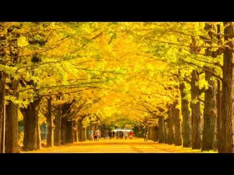 秋風 / 尾崎豊 - YouTube