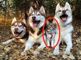 犬と猫両方飼ってる人!