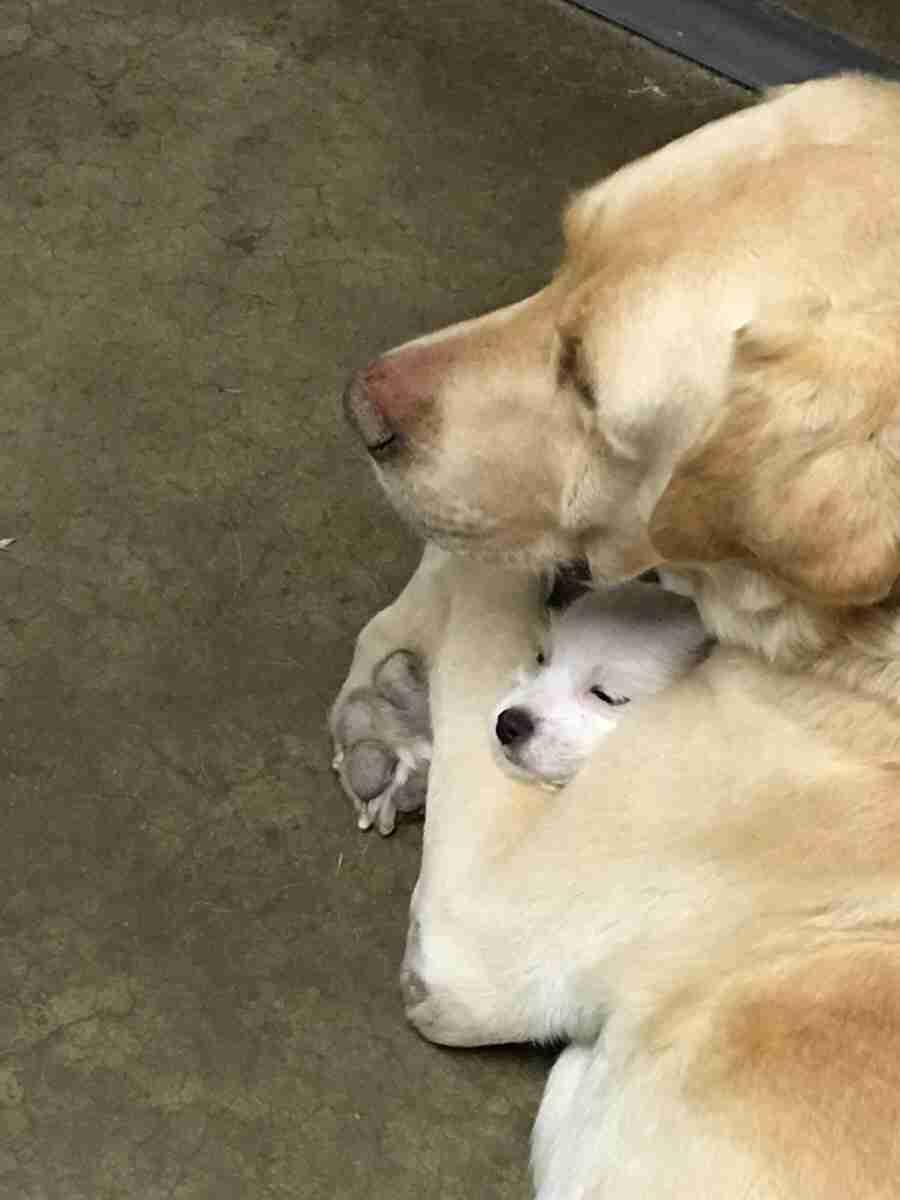 犬が好きすぎる人♪