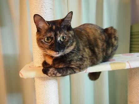 サビ猫ちゃん 好きな方