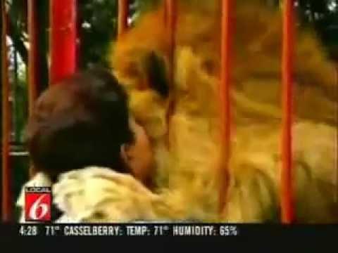 ライオンと女性の数年ぶりの再会 Woman Lion Injured Forest Columbia - YouTube