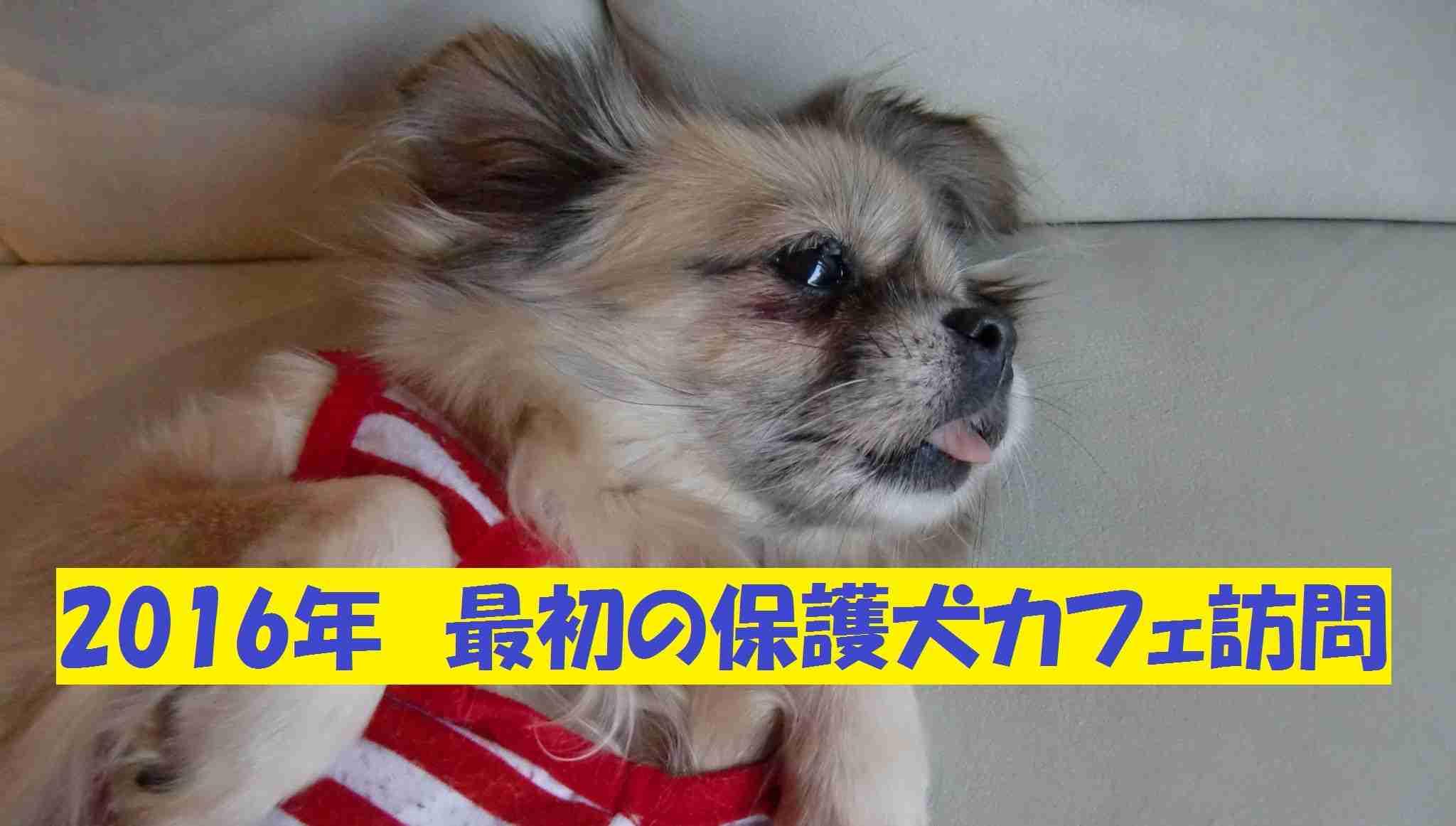 保護犬カフェ訪問 - YouTube