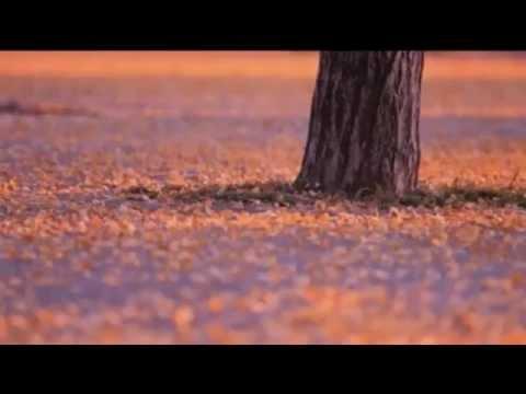 Nguoi yeu dau oi - KoiBitoYo - 五輪真弓   恋人よ Mayumi Itsuwa【歌詞入り】 - YouTube