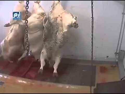 屠殺、これが、現実。人間の惨さ!!! - YouTube