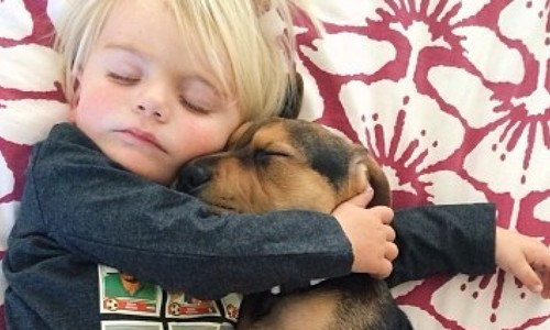 子供の成長を犬とのお昼寝写真で記録するインスタが世界中で話題! :: PECO(ペコ)