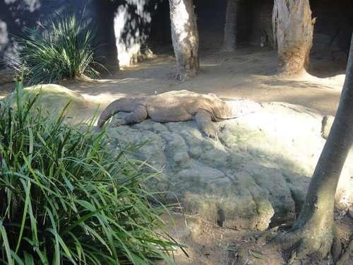 暑さでダラけた感じの動物さんの画像ください