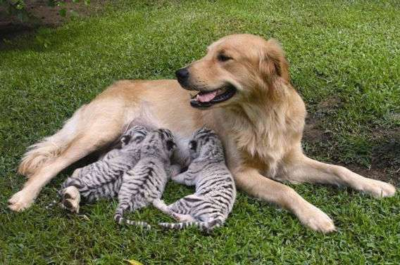 仲良し動物画像を貼ろう