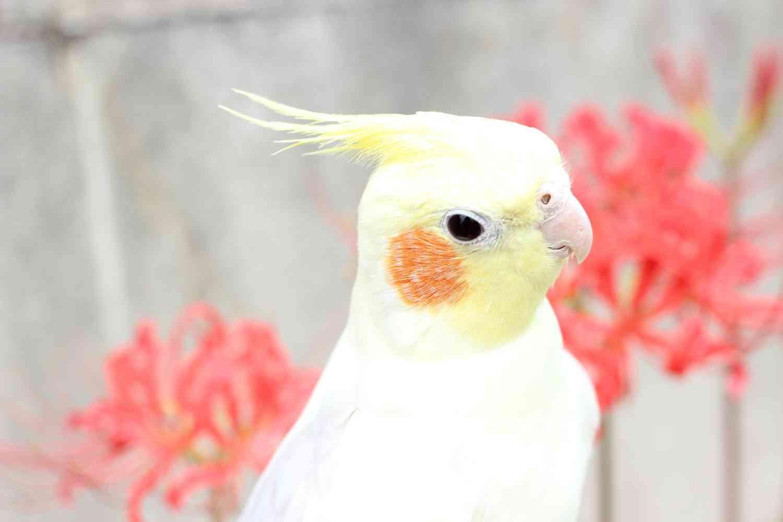 インコの香りアイス、文鳥どら、小鳥カフェ…猫の次は小鳥ブーム