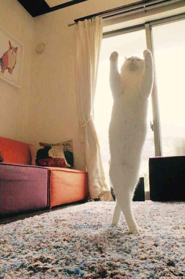 わけがわからぬ(笑)。ウチの猫はいつも何かに足をぺとっと乗せている 8枚