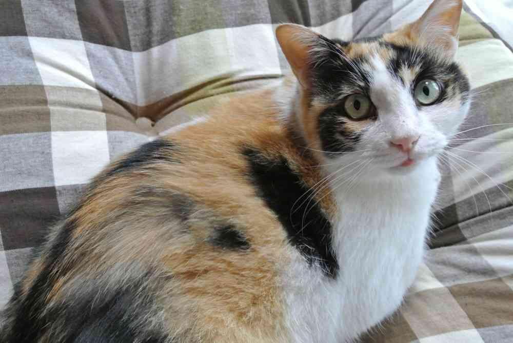 猫カフェで広がる「男性お断り」 「ナンパ」「盗撮」が増えてきた... : J-CASTニュース