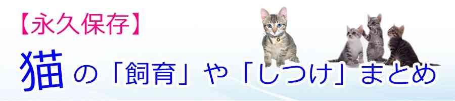 ほとんどメス?サビ猫の特徴が良く分かる5つの性格!