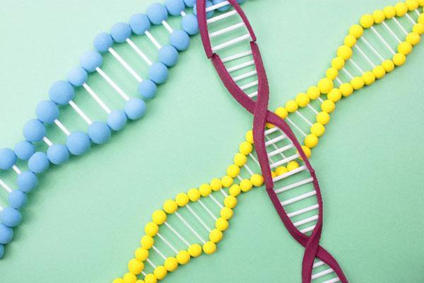 最新科学マイクロキメリズムで分かったDNAの驚愕秘密! - Ameba News [アメーバニュース]