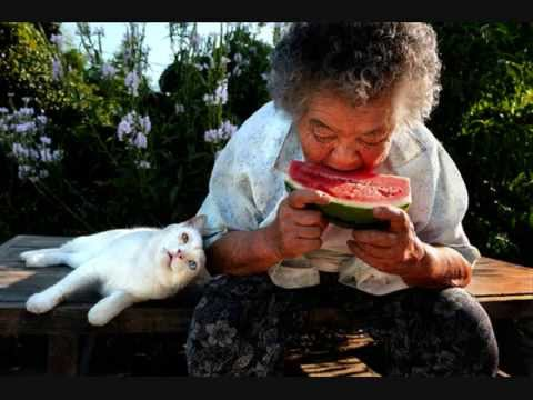 【涙腺崩壊】おばあちゃんと猫のスライドショー【感動】 - YouTube