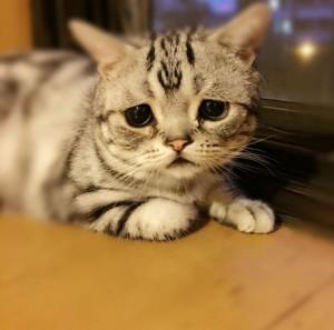 憂いのある表情の画像トピ