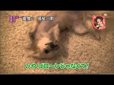 堂本光一 愛犬のパンちゃん - YouTube