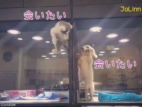 子猫「隣の子犬に会いたい!」壁を必死に乗り越えて…(動画):らばQ