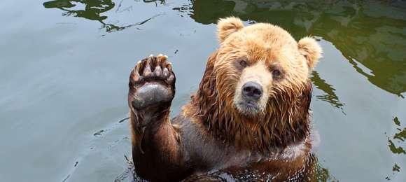 恐怖〝人食いクマ〟来襲に備えよ!放獣か殺処分か、それとも飼育か…揺れる現場
