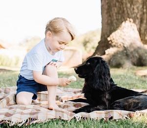 ジョージ王子の愛犬にアイス写真、非難の声で大炎上!