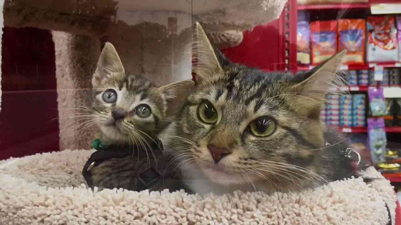 Adventure Cats Rosie and Tommy - YouTube