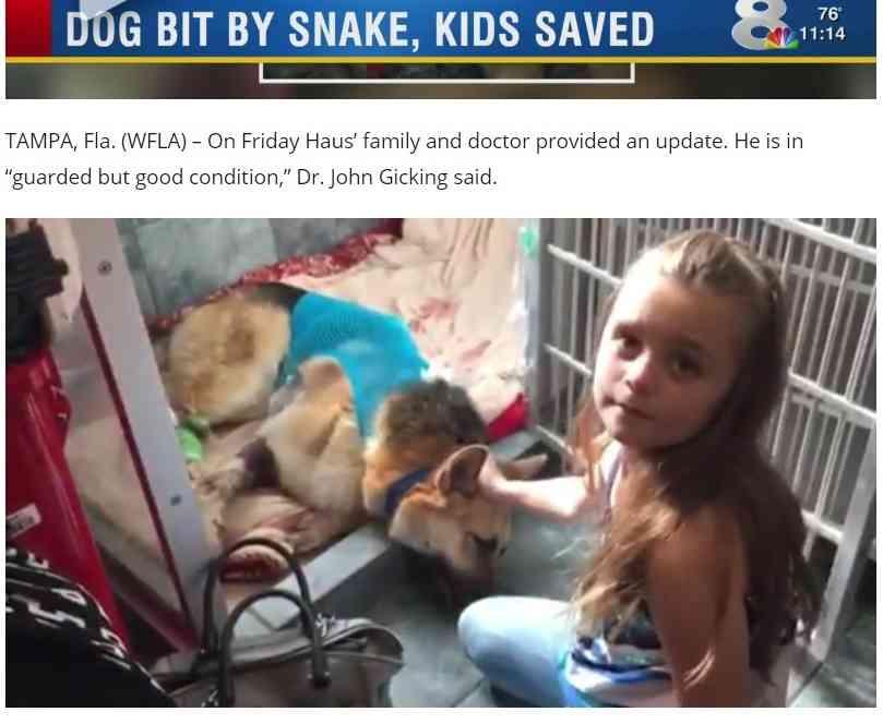 【海外発!Breaking News】毒蛇から7歳女児を守った犬 自ら噛まれつつも(米) | Techinsight|海外セレブ、国内エンタメのオンリーワンをお届けするニュースサイト