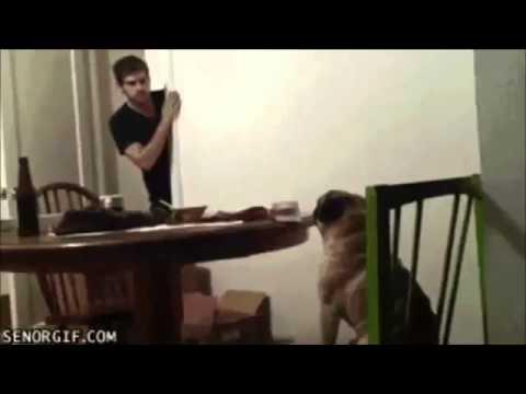 【かわいい!面白い!動物動画】 アニマル系ほっこりムービー 上半期 - YouTube