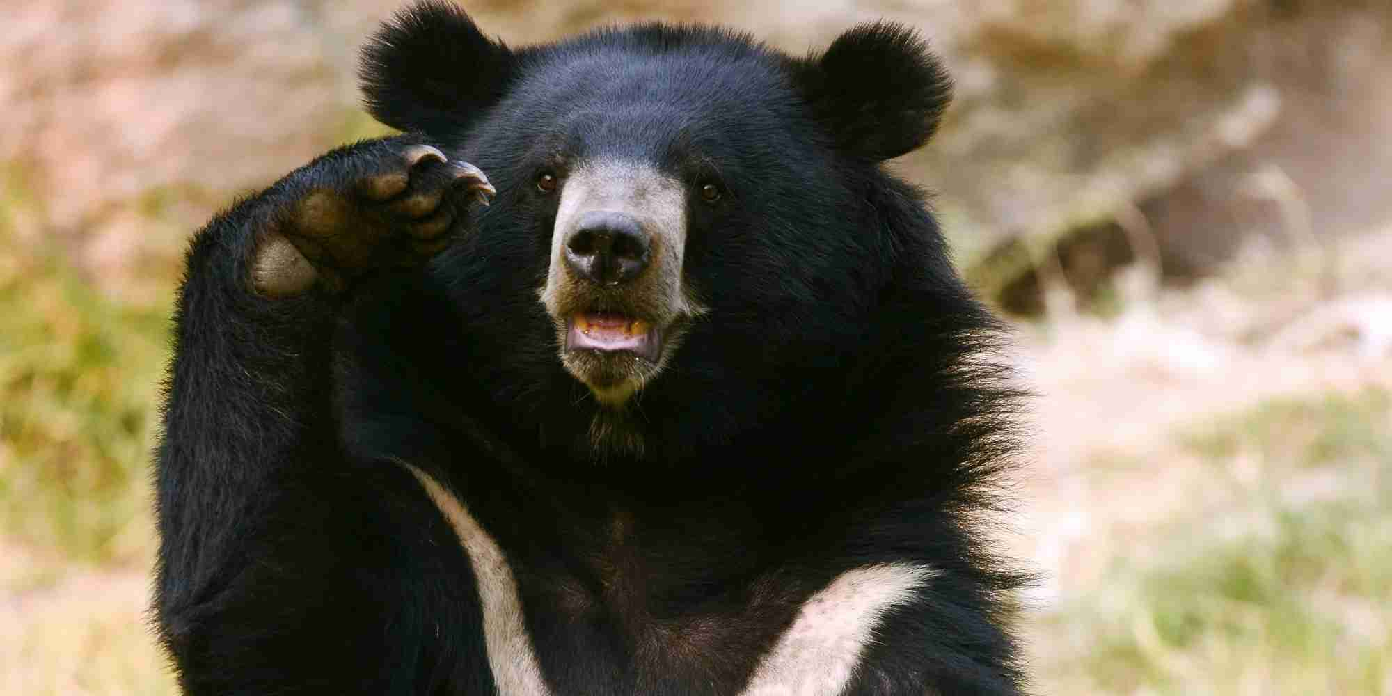 「人は食べられる」クマが学習か 胃から人体の一部、4人を襲った可能性