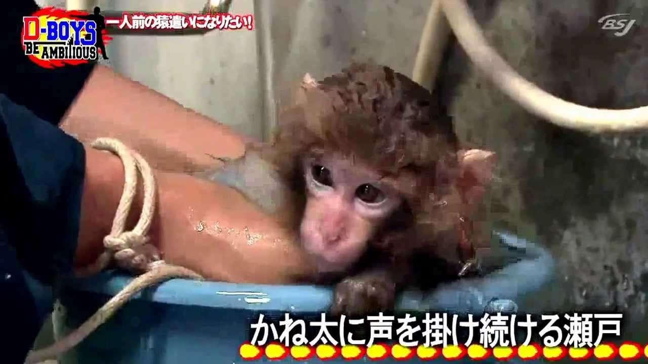 Seto Koji and his baby monkey 2 - YouTube