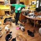 1000匹の猫と暮らす女性が話題 | ANIMALive