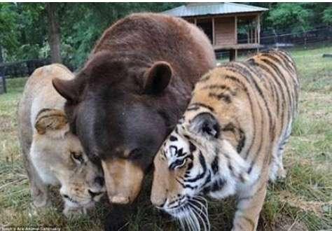 仲良し動物画像を見て癒やされましょう