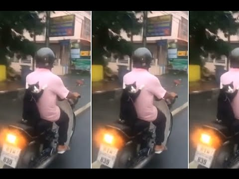 Brave feline latches on to back of scooter using only claws - YouTube