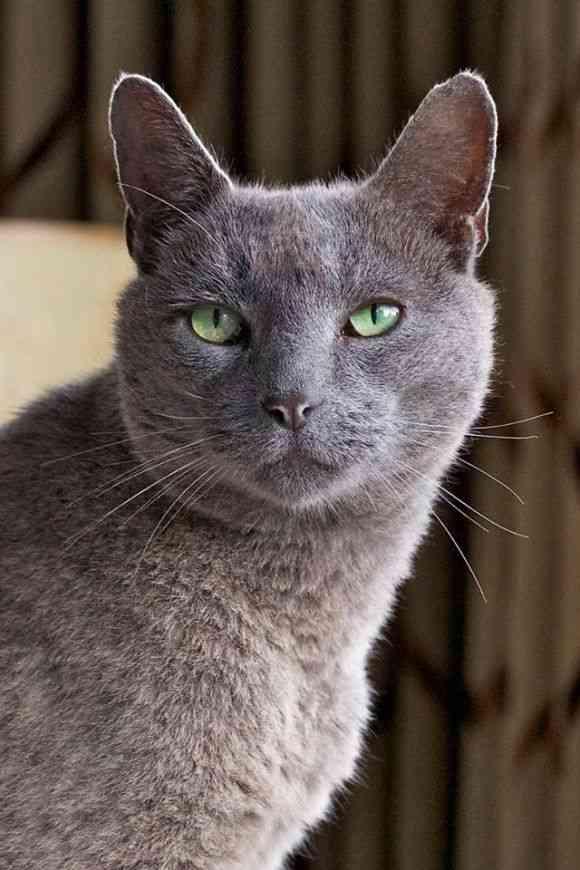 今は亡き愛猫への想いを形に。緑豊かな庭園に出現した巨大な眠り猫のトピアリー(植物造形像)