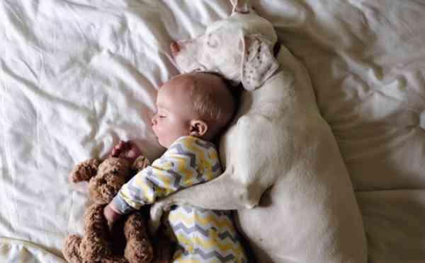 人間の赤ちゃんを寝かしつける犬の姿に絶賛の声 - ライブドアニュース