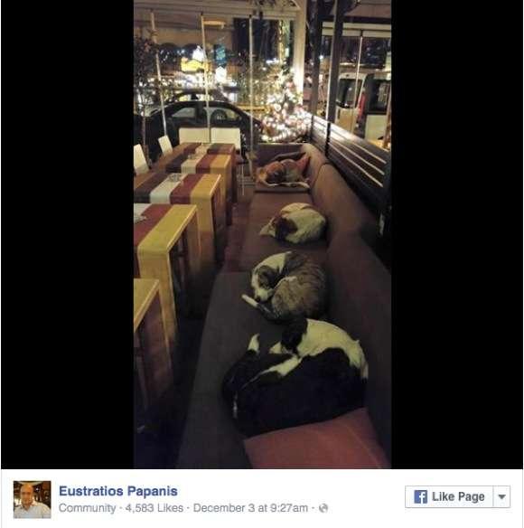 寒い夜はウチにおいで! 夜になると店鋪を開放し「野良犬」に寝床を提供するカフェが話題 | ロケットニュース24